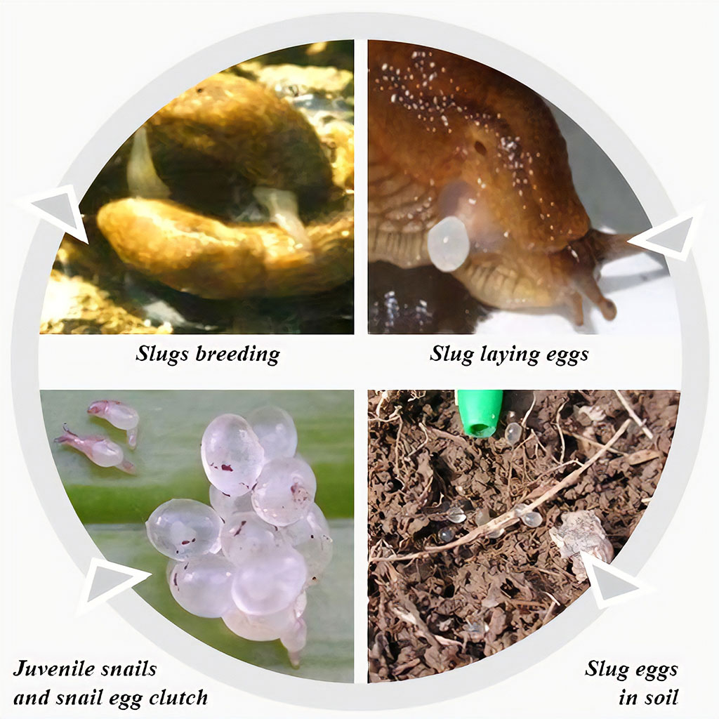 hight resolution of breeding cycle
