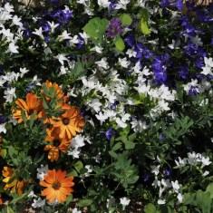 Ez itt a többi virág.