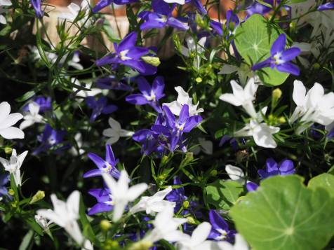 Ez itt a többi virág (közelebbről).