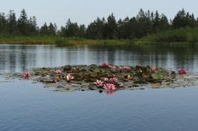Ribnisko Jezero.