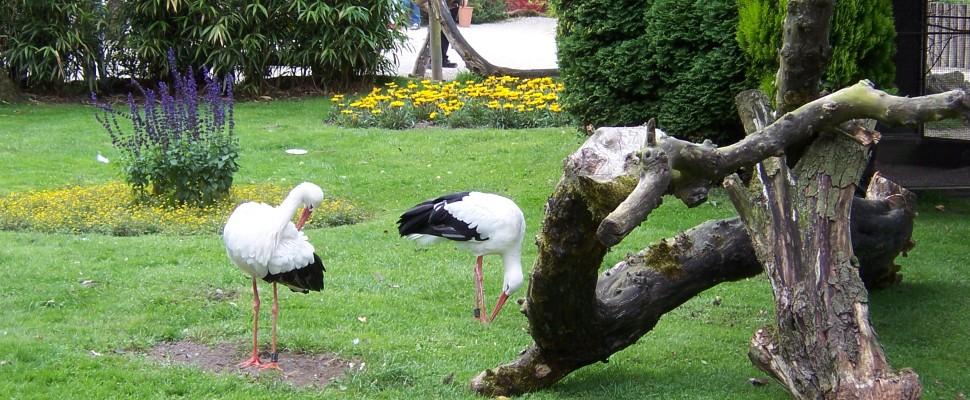 vogelpark_heiligenkirchen_2