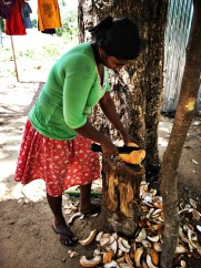 Chopping up a King Coconut