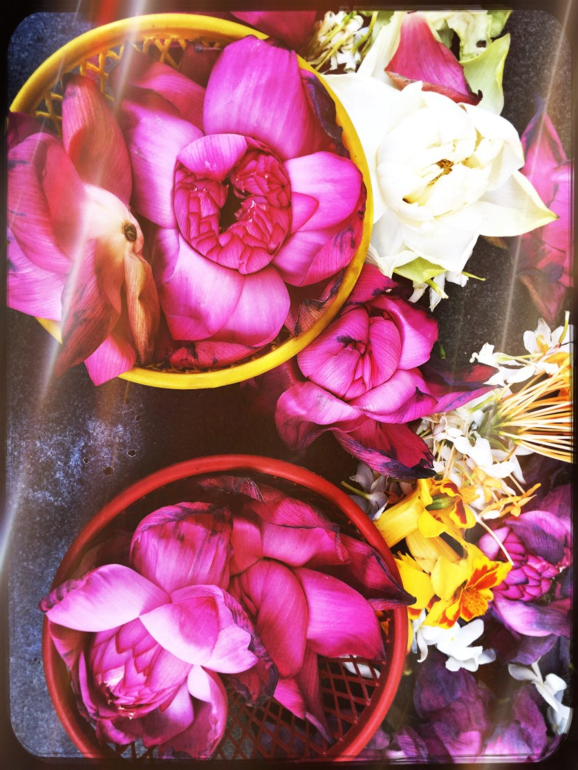 Lotuses at Polonnaruwa Gal Viharaya, Sri Lanka