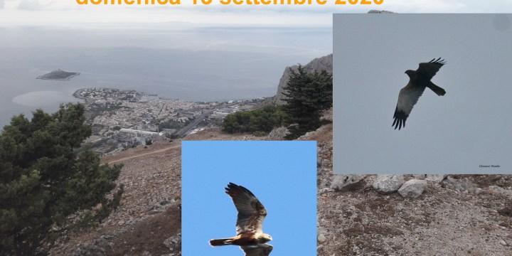 BIRDWATCHING A RAFFO ROSSO (PA) – 13 SETTEMBRE 2020. ASPETTANDO LA MIGRAZIONE DEL FALCO DI PALUDE