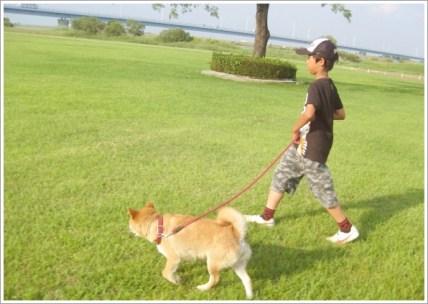 犬、子供、散歩、夏