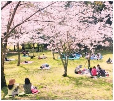 桜、春、お花見