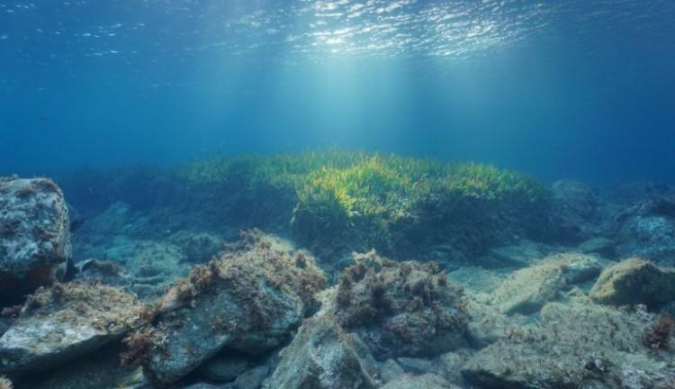 Ilmuan Temukan Konsentrasi Mikroplastik yang Sangat Besar di Dasar Lautan