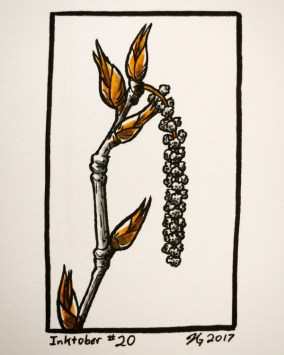#20 – Black Cottonwood