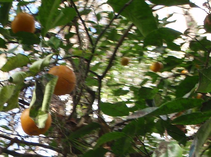 hillsborough-river-wild-oranges-002