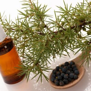 Aceite de Enebro Liquids Chemical