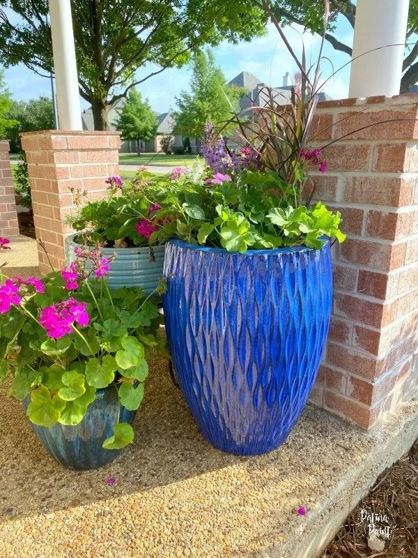 blue flower pots with flowers