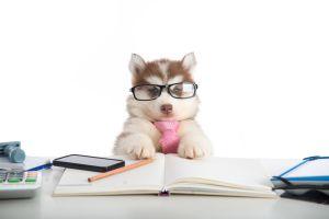Work Like a Dog - Lisa-Michelle Kucharz