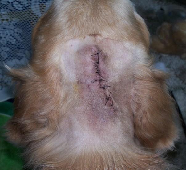 stitches3