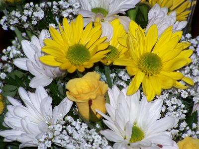 flowersfromjulie3