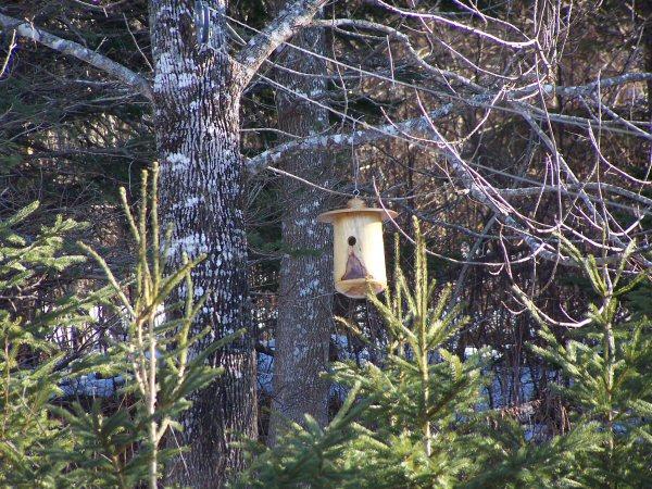 woodsinjanuary1