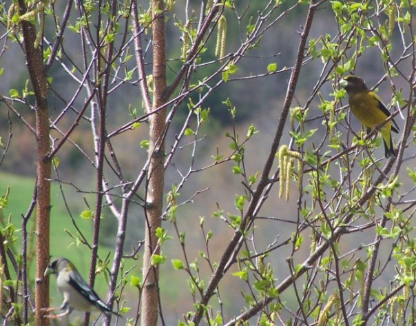 firsthummingbird2