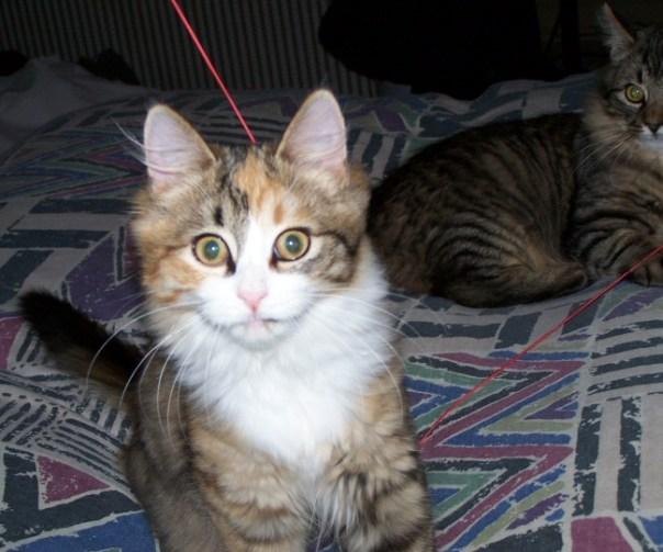 kittensnov2