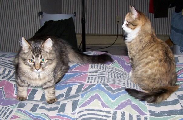 kittensnov4