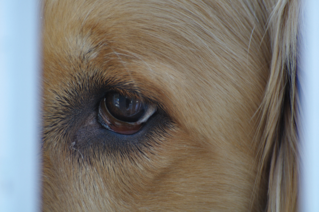 Monty Close Up