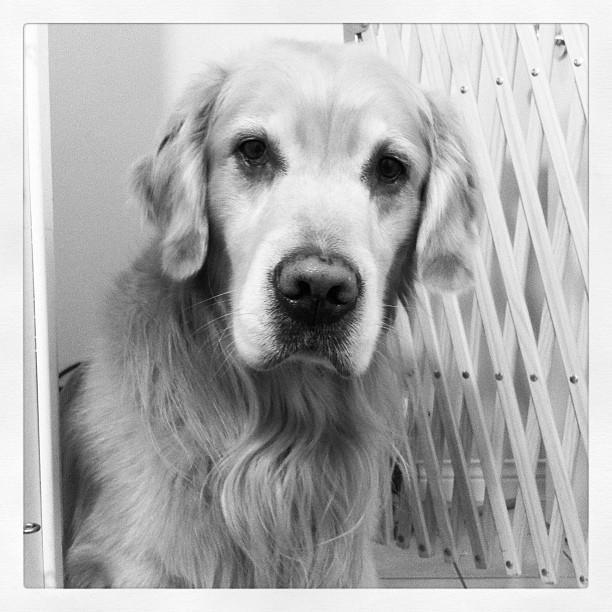 Monty - December 22, 2011
