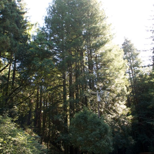 Took a trip out to see the California redwood trees. They are SO TALL