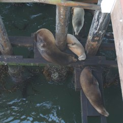 All night we could hear the sea lions bark. I walked out on the boardwalk one day to find where they hid out, sleeping under the wharf.