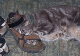 Zeus in my brother's sandal