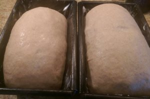 loaves ready for baking