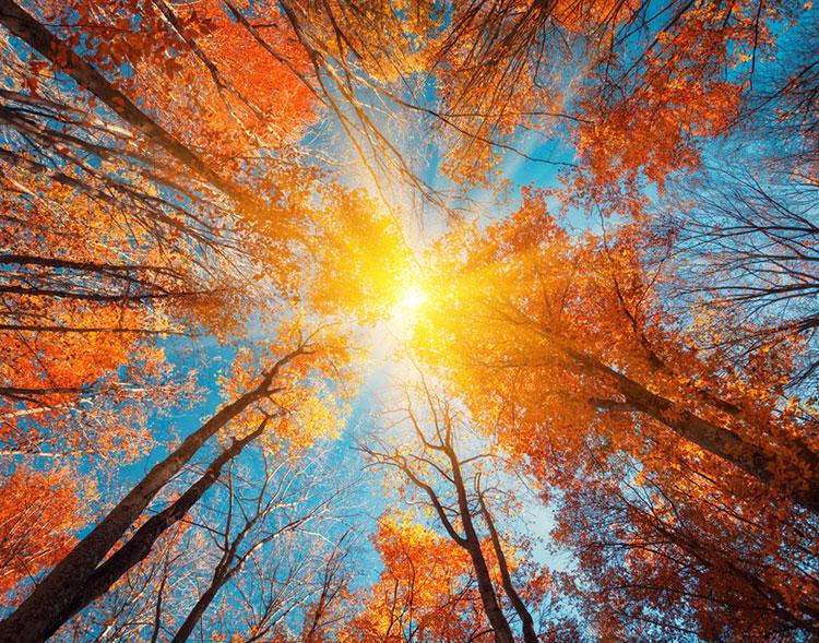 treesupsunsky