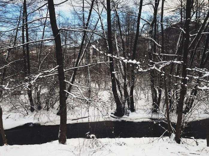 Winter wonderlanding.