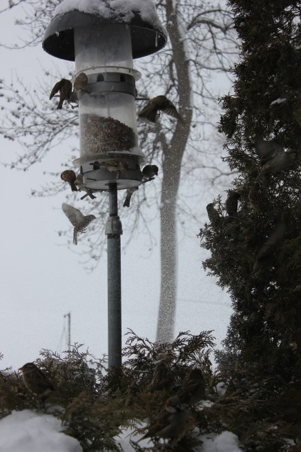 "the birds waiting to get a ""turn"" are the feeder..."