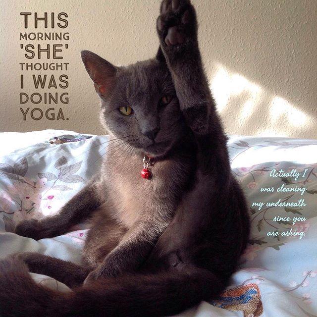 Cat Yoga - not.