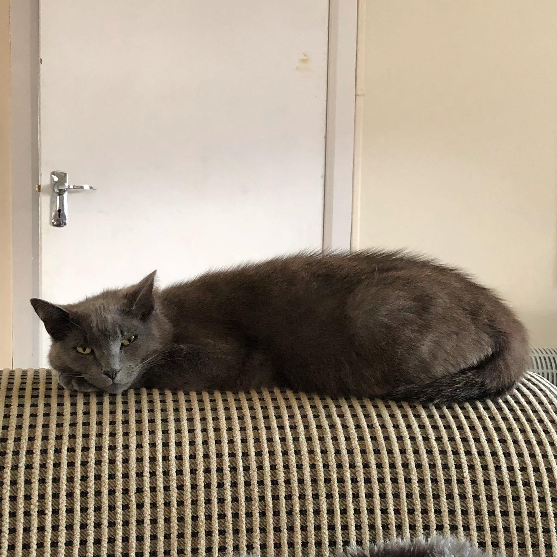 Cat's gone flat again.