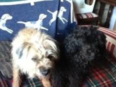 Chutney and friend