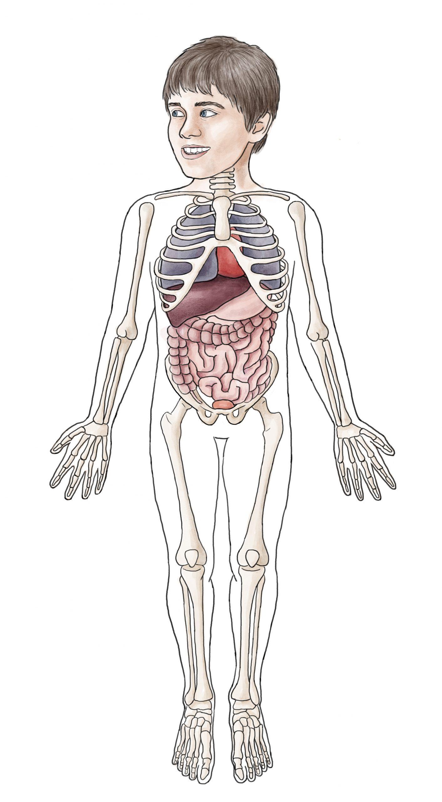 Eine Illustration von Lisa Cuthbertson, die die Anatomie eines Kindes zeigt