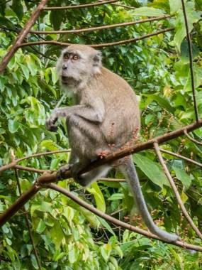 Monkey MacRitchie Reserve