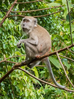 Monkey MacRitchie Reserve
