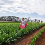 Tesselaar Tulip Festival 2017, Dandenong Ranges