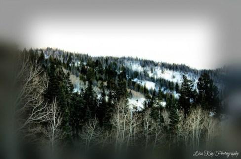 WinterShimmer4