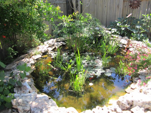 Easy care pond, Austin
