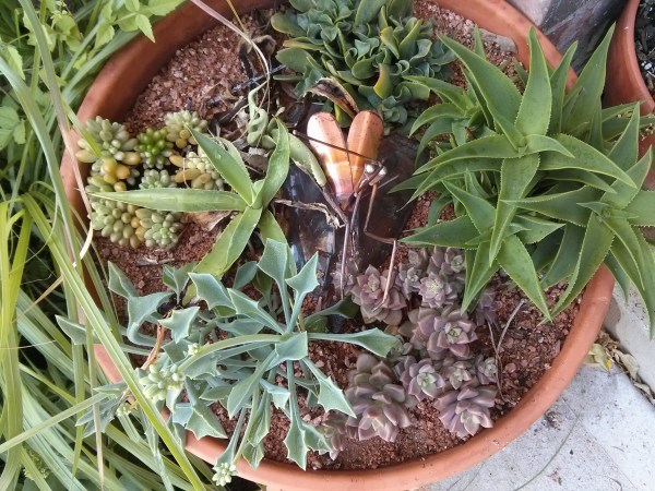 Potted plants require water more often.