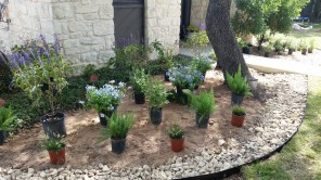 Plant choices austin, lisa lapaso, Lisa's landscape