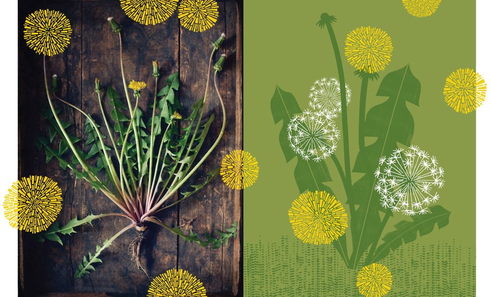 Dandelion Dreams – Making a MODbotanical