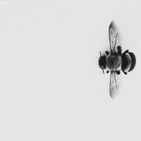 Buzzed ©lisamjw