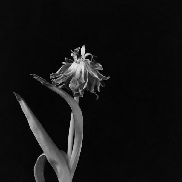 Hula Dancer ©lisamariewaddell