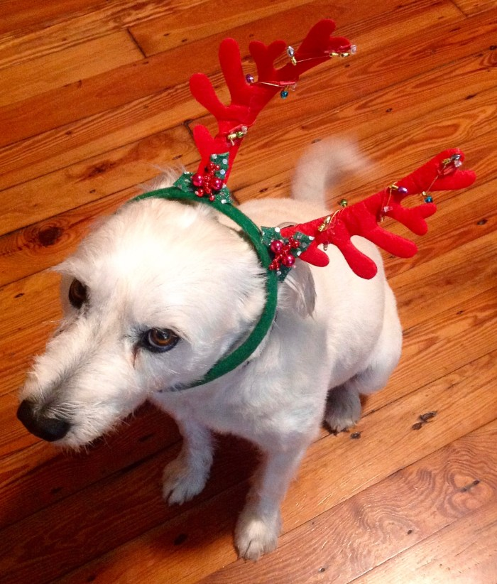 Boudreaux the Reluctant Reindeer