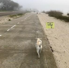 Leprechaun Run finish line