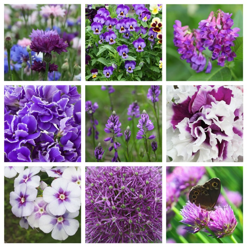 square edible flowers collage