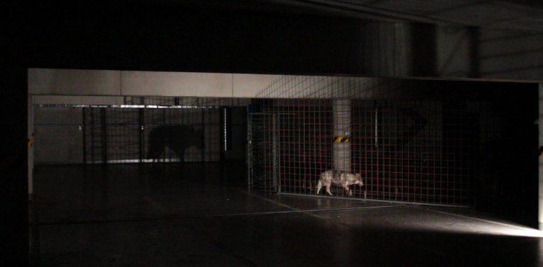the_Aesthetics_of_heritage_Kosice_White_Night_Lisa_Premke_Wolf_Choir_shadow_installation_view_wolf_cage