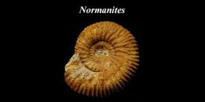 Normanites